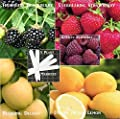 Fruit Pack Raspberry, Blackberry, Dwarf Lemon, Strawberry, Yellow Apple (Organic) 395+ Seeds 648620997982 Self Fertile + 5 Free Plant Marker - Stocking Stuffers