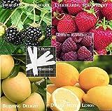 Fruit Pack Raspberry, Blackberry, Dwarf Lemon, Strawberry, Yellow Apple (Organic) 395+ Seeds 648620997982 Self Fertile + 5 Free Plant Marker - Stocking Stuffers