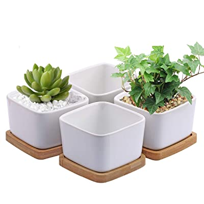 Succulent Pots, OAMCEG 3.54 inch Square Design for Succulent/Cactus, Set of 4 White Ceramic Succulent Cactus Planter Pots with Bamboo Tray(Plants NOT Included) : Garden & Outdoor