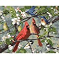 Plaid Enterprises 22599 Songbirds Paint by Number Kit, Multicolor