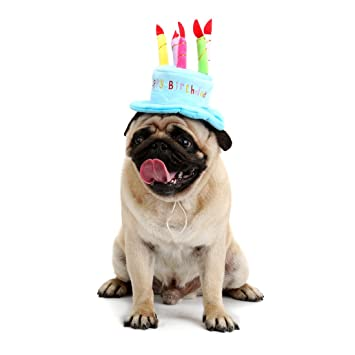 Birthday Accessories Pet Dog Hat Cake Personality Supply Blue Amazonca Supplies