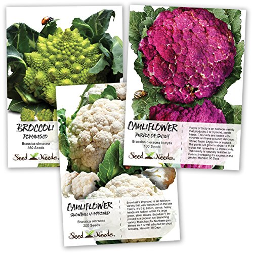 - Seed Needs, Cauliflower Seed Collection (Romanesco, Purple of Sicily & Snowball Y Improved) Non-GMO
