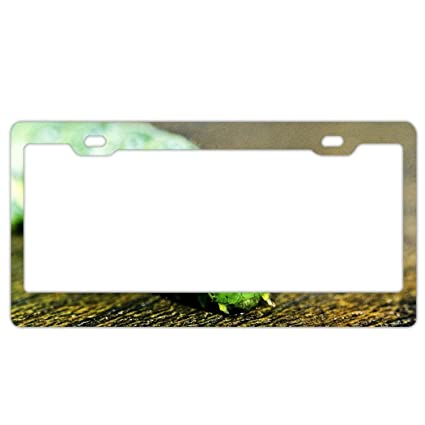 Amazon.com: Car License Plate Frame - Animal Caterpillar Alumina ...