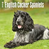 English Cocker Spaniels 2018 12 x 12 Inch Monthly Square Wall Calendar, Animals Dog Breeds (Multilingual Edition)