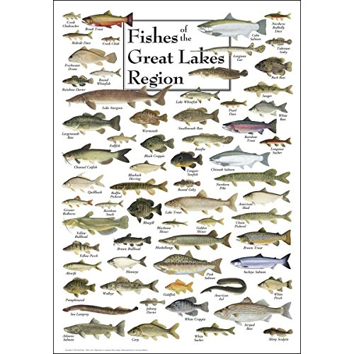 Earth Sky & Water Poster - Fishes of the Great Lakes Region
