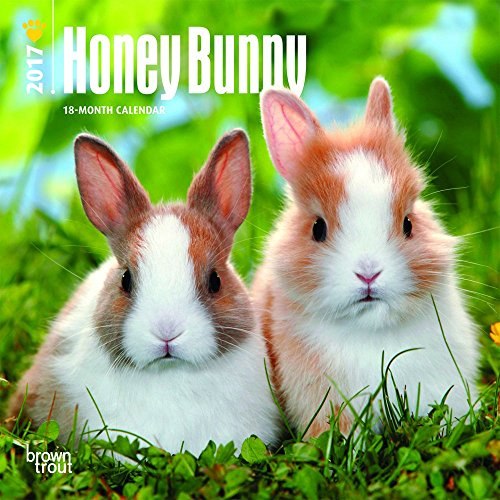 Honey Bunny 2017 Mini 7x7