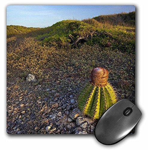 Danita Delimont - Succulents - Melon cactus succulent, Meseta trail, Puerto Rico-CA27 MPR0069 - Maresa Pryor - MousePad (mp_75319_1)