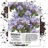 Seed Needs, Lacy Phacelia (Phacelia tanacetifolia) 800 Seeds
