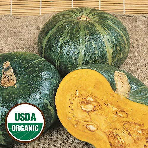 20 Organic buttercrop Burgess Winter Squash Seeds - everwilde Farms Mylar Packet (And Co Plant Seed Burgess)