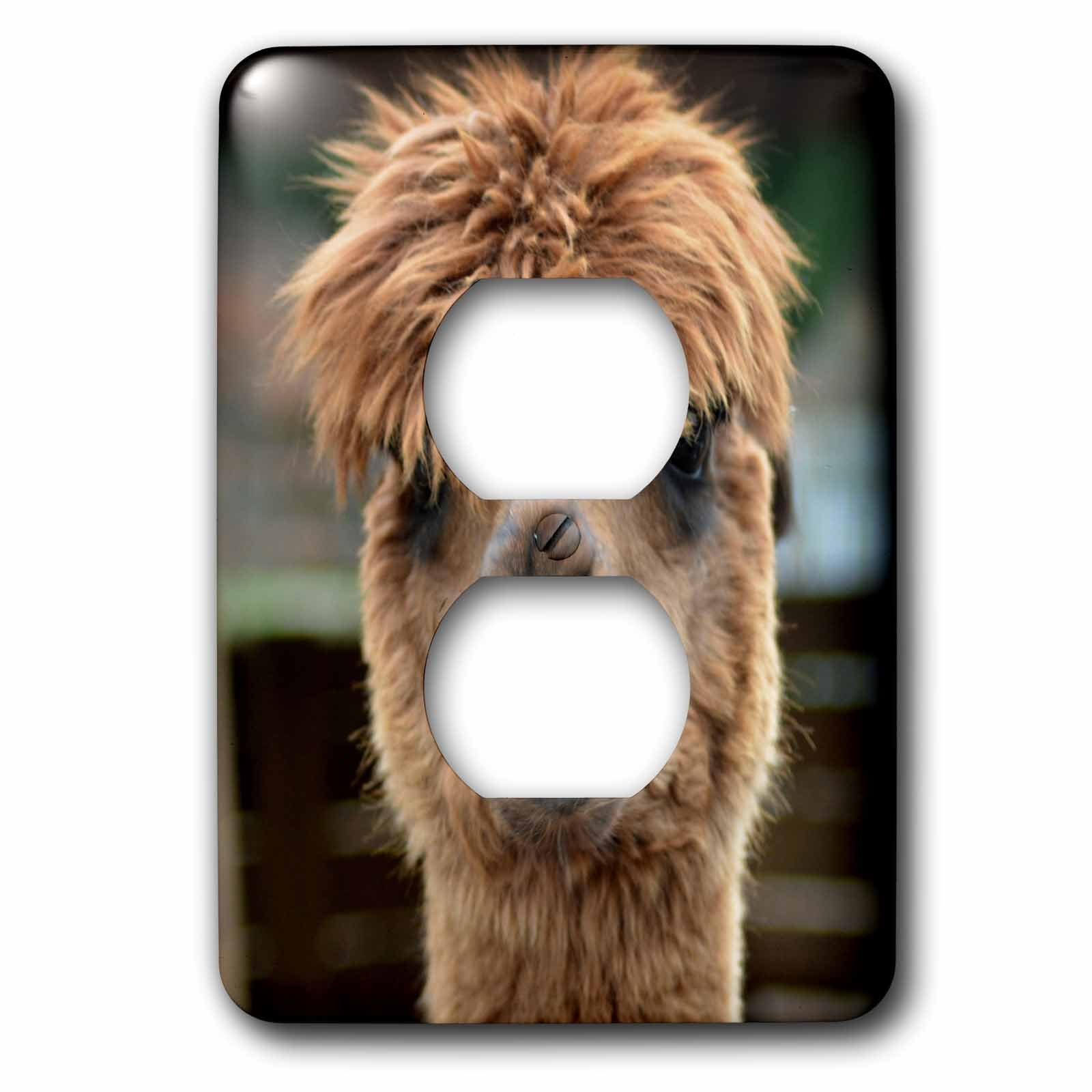 3dRose WhiteOaks Photography and Artwork - Lamas - Laughing Lama is a photo of a lama showing its teeth as if laughing - Light Switch Covers - 2 plug outlet cover (lsp_265335_6)