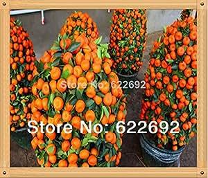 50 Pcs/pack Potted Edible Fruit Seeds Bonsai Climbing Orange Tree Seeds