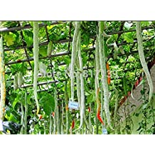 New Home Garden Plant 3 Seeds SNAKE GOURD Multicolored Craft Gourd Lagenaria Siceraria Vine Vegetable Seeds