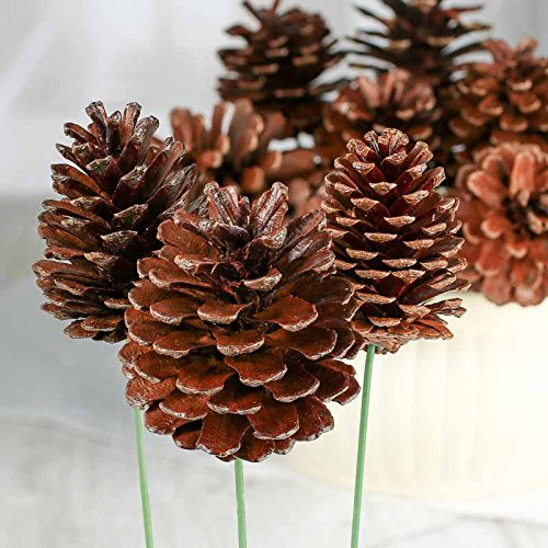 Factory Direct Craft Package of 12 Natural Lacquered Pinecone ()