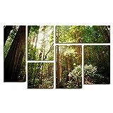 Trademark Fine Art Muir Woods by Ariane Moshayedi Wall Decor, 6-Panel Set
