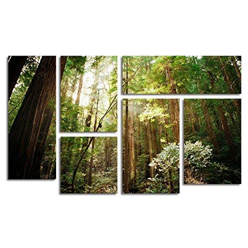 (Trademark Fine Art Muir Woods by Ariane Moshayedi Wall Decor, 6-Panel Set)