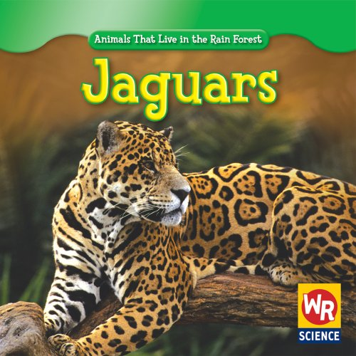 Jaguars  Animals That Live In The Rain Forest