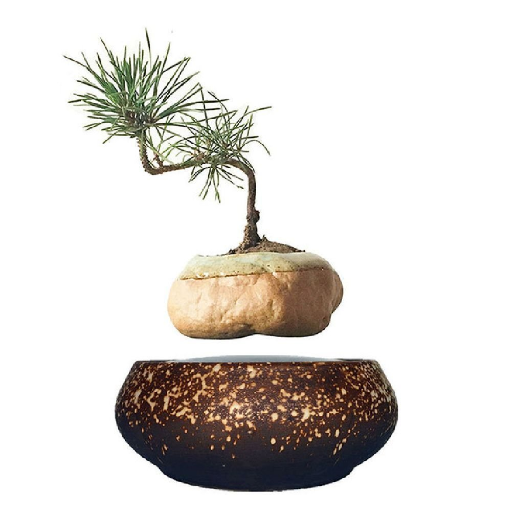 Amazon.com: magnetic levitation potted plant floating air bonsai tree pot garden beautiful gifts for men: Home & Kitchen