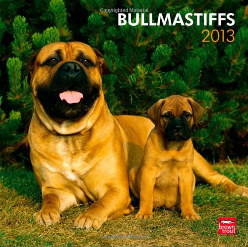 bullmastiffs-2013-original-browntrout-kalender