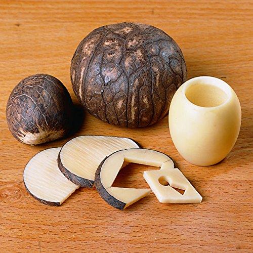 Tagua Nuts 5-Piece ()