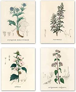 Home Decor Popular Old-Fashioned Plant Botanical Prints,vintage Plant specimen wall art picture for bedroom living room home decoration Botanical Drawings art picture set of 4 8X10 inch Unframed