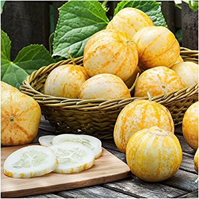 Package of 90 Seeds, Lemon Cucumber (Cucumis sativus) Non-GMO Seeds by Seed Needs