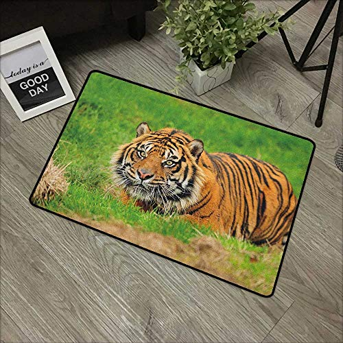 Bedroom door mat W24 x L35 INCH Tiger,Sumatran Feline Hiding in Ambush while Stalking Its Prey Moments Before Attack, Green Orange Our bottom is non-slip and will not let the baby slip,Door Mat Carpet