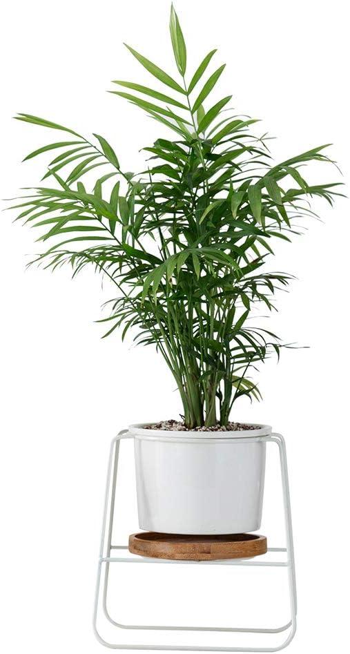 Macetas de interior, plantas modernas y jardineras Jardín Maceta redonda de cerámica blanca Macetero grande con soporte de metal/Bandeja de bambú para cactus planter suculentas: Amazon.es: Jardín