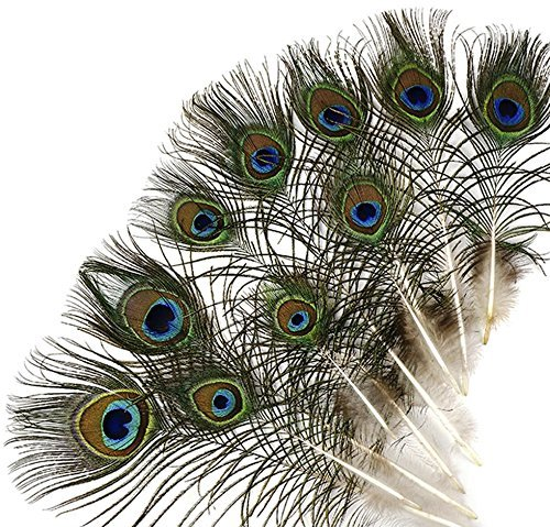 (Kayso Peacock Mini Tails Feathers, 25)