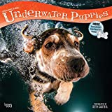 Underwater Puppies 2019 12 x 12 Inch Monthly Square Wall Calendar, Pet Humor Puppy (Multilingual Edition)