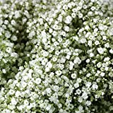 WinnsFlora 10 Branches (Pcs) Gypsophila Baby Breath Artificial Flower Bouquet, Approx. 900 Beautiful WHITE Flowers for Wedding Bridal Party Home Floral Arrangement Decor