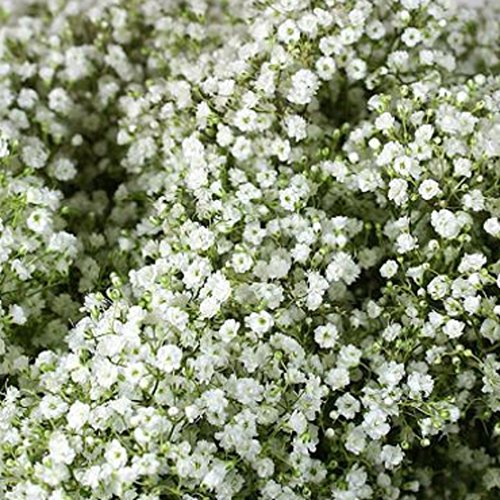WinnsFlora 10 Branches (Pcs) Gypsophila Baby Breath Artificial Flower Bouquet, Approx. 900 Beautiful WHITE Flowers for Wedding Bridal Party Home Floral Arrangement Decor by WinnsFlora