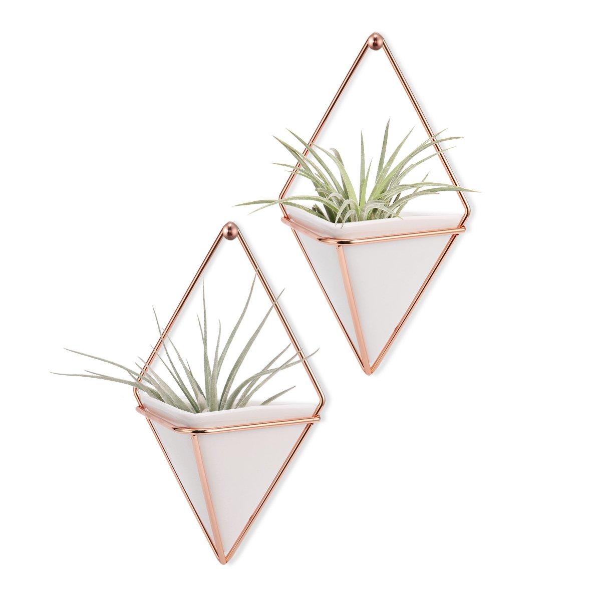 Hanging Vase,LANMU Air Plants Pots,Hanging Wall Decor,Plant Holder,Hanging Plant for Air Plants/Succulents/Cactus Plants/Office Plants/Artificial Plant -2 Pack