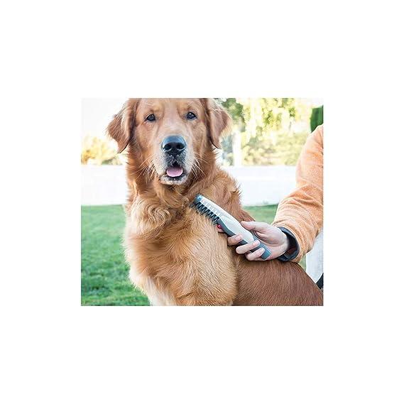 InnovaGoods IG115175 Peine Eléctrico Corta Nudos para Perros: Amazon.es: Productos para mascotas