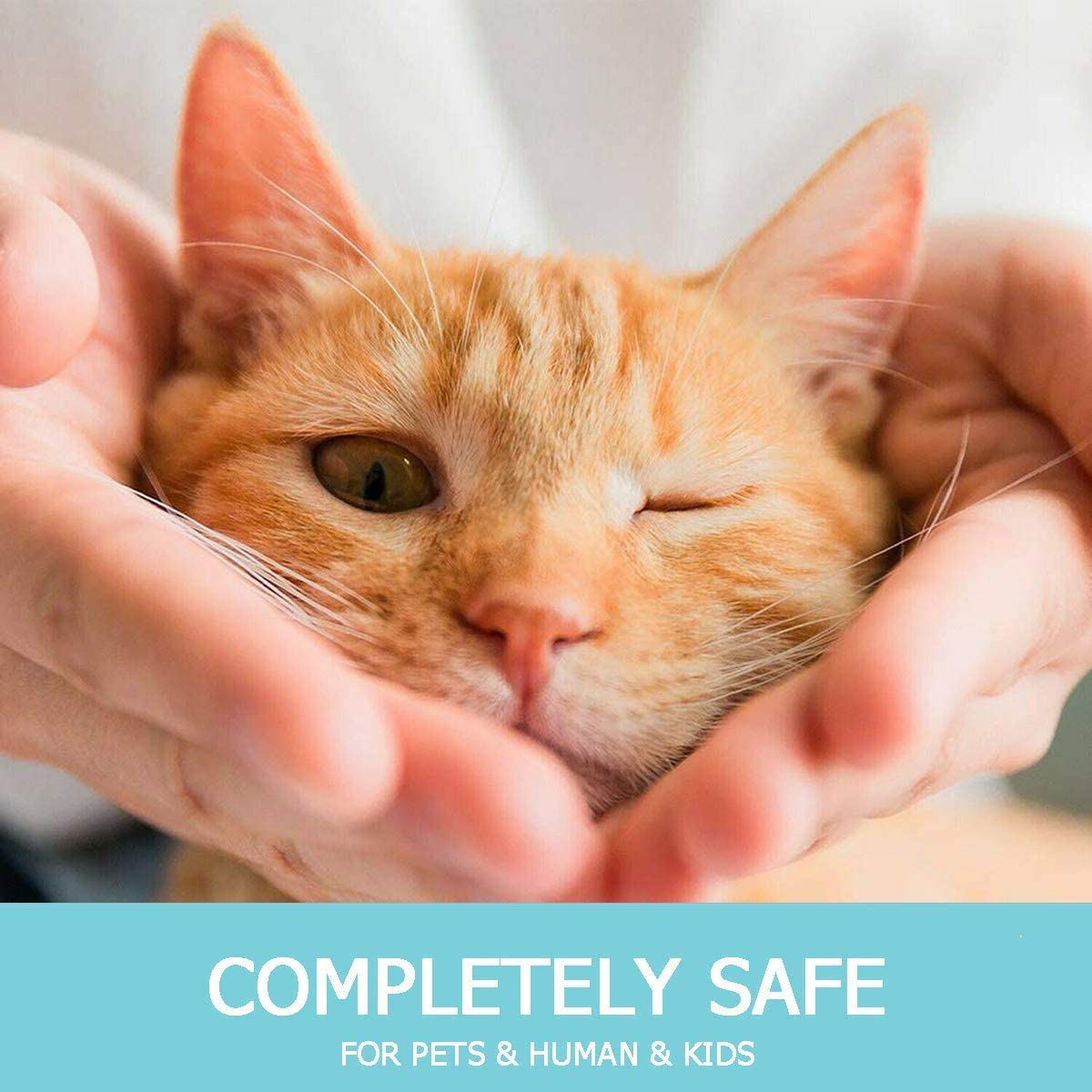 One Size Fits All 8 Month Flea and Tick Treatment and Prevention for Cats Adjustable /& Waterproof Cat Flea and Tick Collar Enhanced with Natural Essential Oils