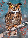 LIPHISFUN Needlework 5D DIY Diamond Painting Cross Stitch Kits Big Eye Owl Square Drill Full Diamond Embroidery Home Decor(30x40cm)