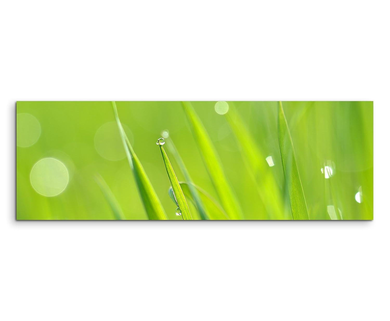 Wandbild Naturfotografie Frisches Gras im Morgentau auf Leinwand