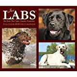 Just Labs 2018 Daily Desk Boxed Calendar