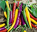 PLEASE READ! THIS IS A MIX!!! 30+ ORGANICALLY GROWN Cayenne Rainbow Mix Hot Pepper Seeds Heirloom NON-GMO Rare, Spicy, Rich Flavor, Productive, From USA