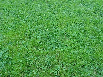 The Dirty Gardener Ecology Lawn Seed