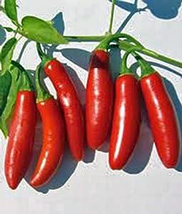 Serrano Pepper, Long RED Thin, Heirloom, Grown 500 Seeds