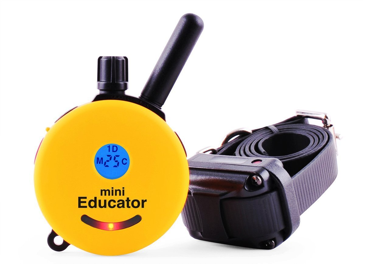 Best Dog Training e Collar - Educator Einstein Remote Trainer - Mini Educator 1/2 Mile Remote Trainer ET-300TS WaterProof - Vibration Tapping Sensation With eOutletDeals Postcard Magnet Calendar