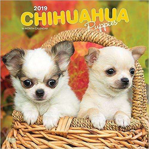 Chihuahua Puppies 2019 Calendar