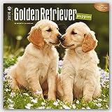 Golden Retriever Puppies 2016 Square 12x12