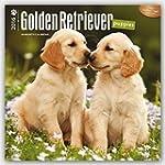 Golden Retriever Puppies 2016 Square...