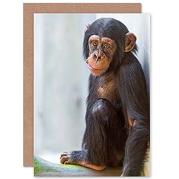 Amazon.com: Tarjeta Felicitación regalo Foto Cute Chimp ...