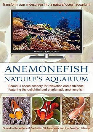 Amazon com: Anemonefish: Nature's Aquarium DVD [nature video for
