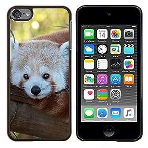KLONGSHOP // Cubierta de piel con cierre a presión Shell trasero duro de goma Protección Caso - Little Red Panda Bear Tree Face Tail Animal - Apple iPod Touch 6 6th Touch6 //