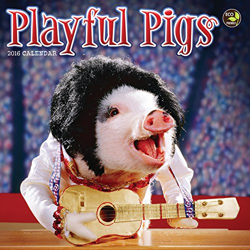 2016 Playful Pigs Small Wall Calendar