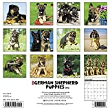 Just German Shepherd Puppies 2018 Calendar