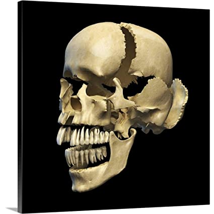 Still life photo human skull Canvas Wall Art prints high quality